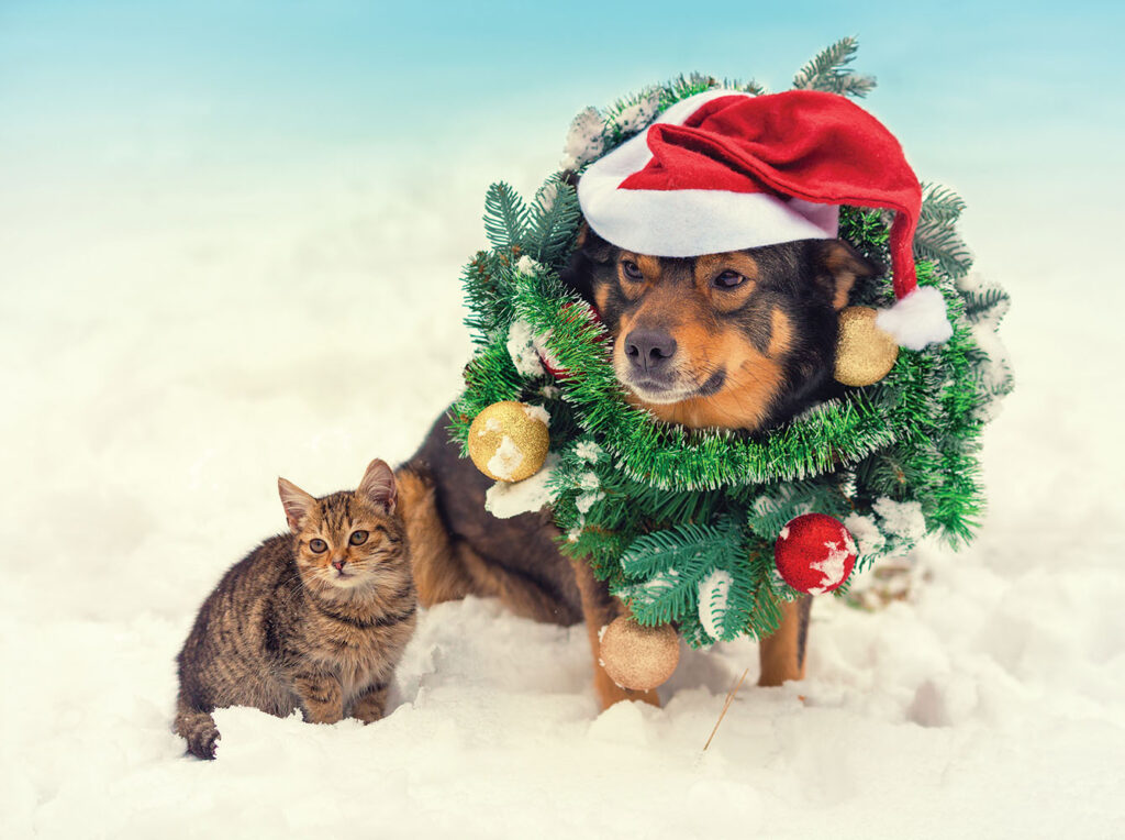 Dog & Kitten Christmas Gifts